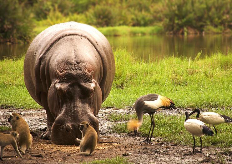 139502_Kenya_Africa_Tsavo National Park_shutterstock_58651660