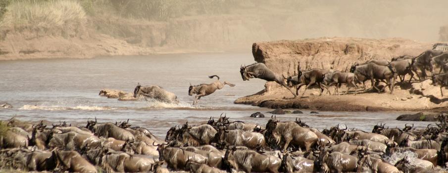 MaasaiMara2018