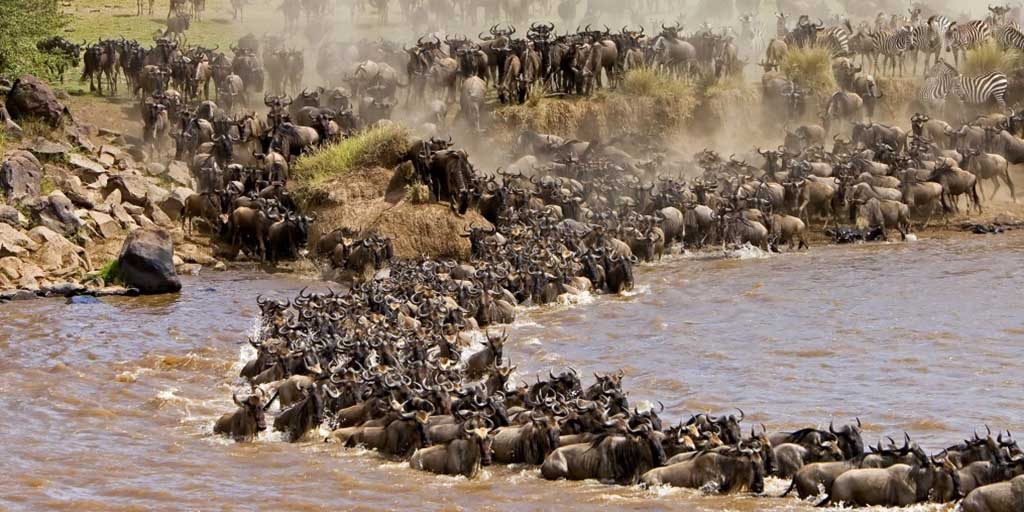 Masai-Mara-Wildebeest-Migration-Safari