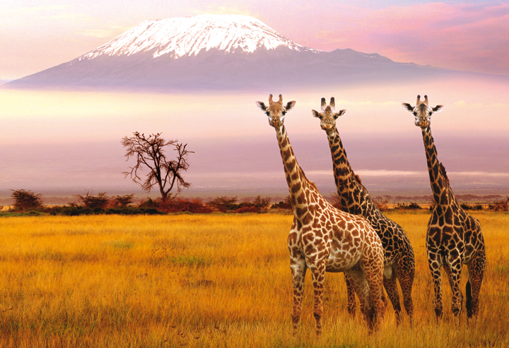 amboseli-giraffe-1