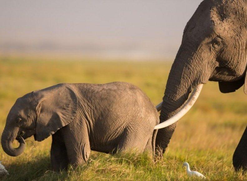 amboseli_baby_elephant_1