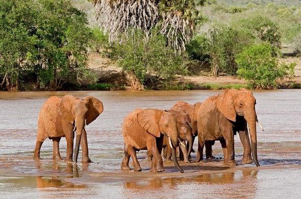 galdessa-camp-elephants-590×390