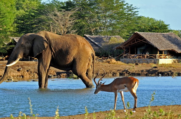 satao-camp-elephant-impala-view-from-camp-01-590×390