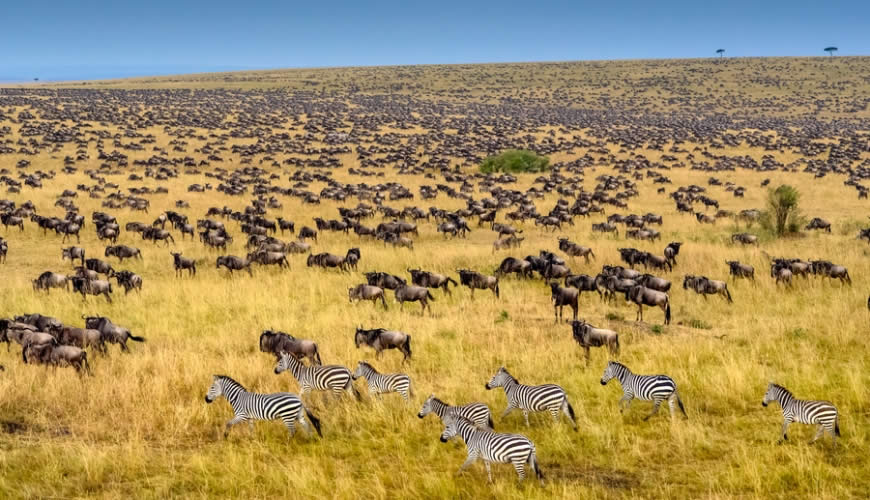 wildebeest-mara-migration