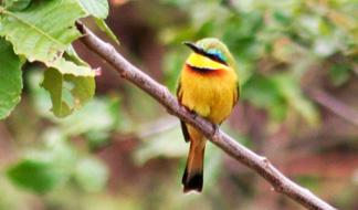 bird_324