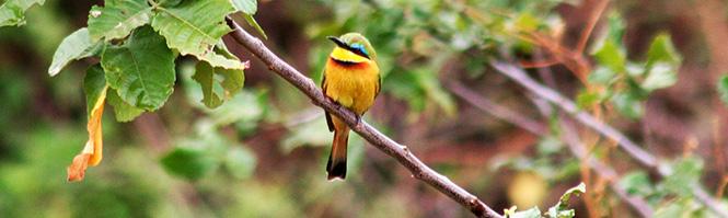 bird_665